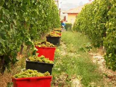 Farm work is an option for taking you around the world. The grape picking season for example, is at different times in France, California, Australia and South Africa, to name a few places.
