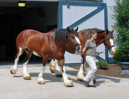 If you're interested in horses you might want to stay on a farm.