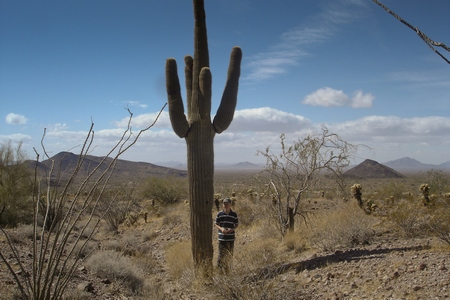 Tiny Aron with huge cactus in southern Arizona